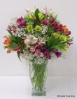 Order Awesome Alstroemeria